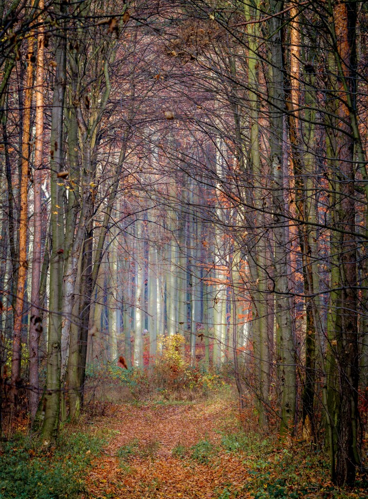 Forest of the Unicorn, Photo of the Week, Art of Adventure